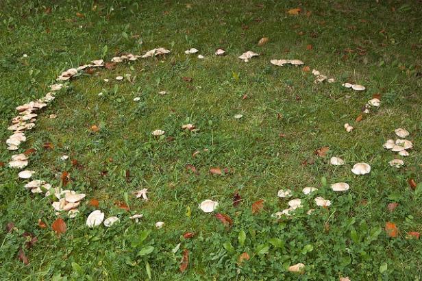 fairy-ring-mushrooms
